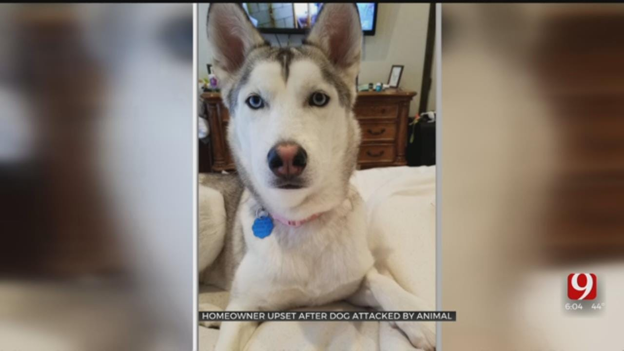 Family Devastated After Dog Mauled By Wild Animal In Piedmont