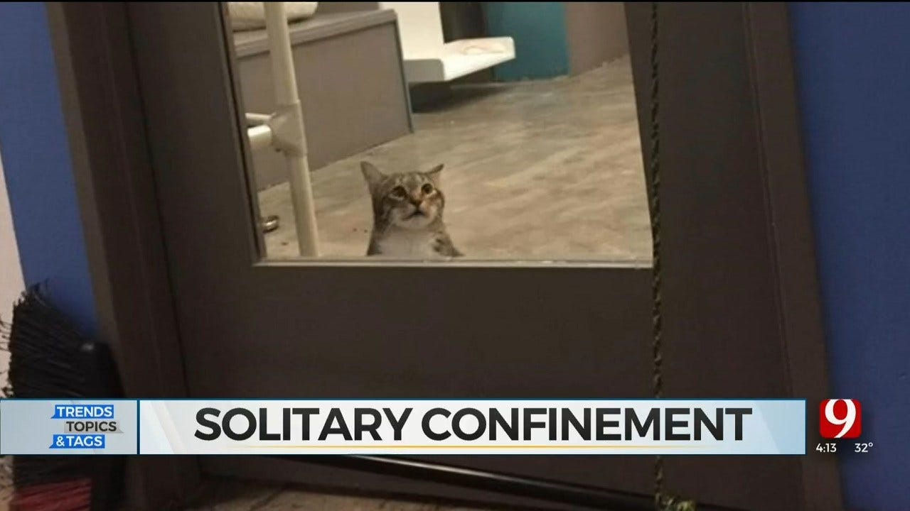 Trends, Topics & Tags: Solitary Confinement