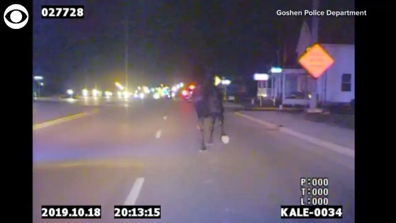 WATCH: Police Chase A Loose Horse Who Trotted Onto A Highway