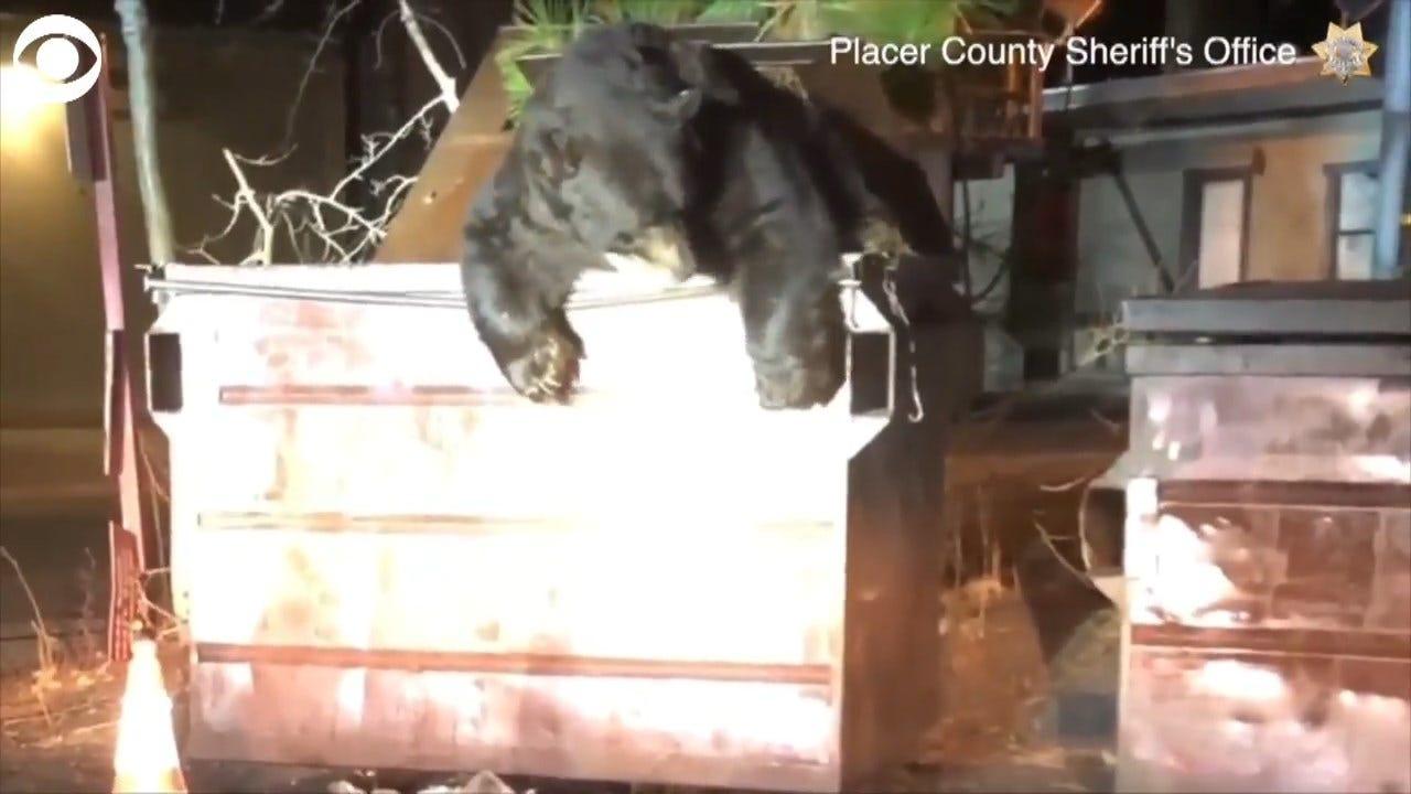 WATCH: Deputies Rescue T-Shirt The Bear From A Dumpster