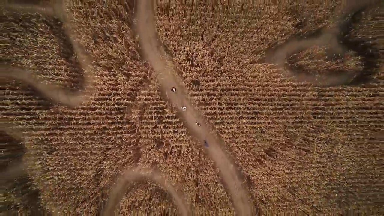 Thousands To Enter 28 Acres Worth Of Corn Maze
