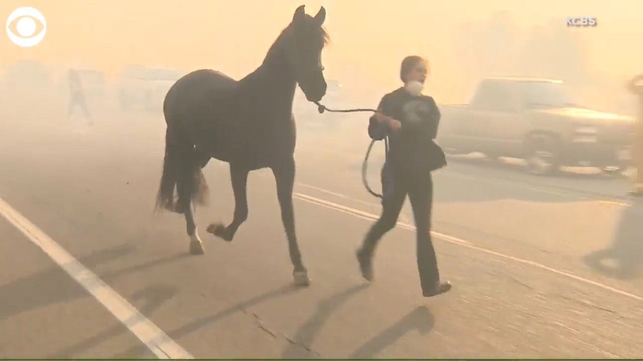 WATCH: People In California Rush To Save Horses, Goats