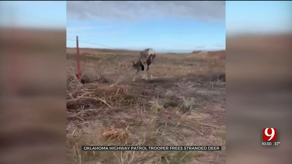 CAUGHT ON CAMERA: OHP Trooper Frees Stranded Deer