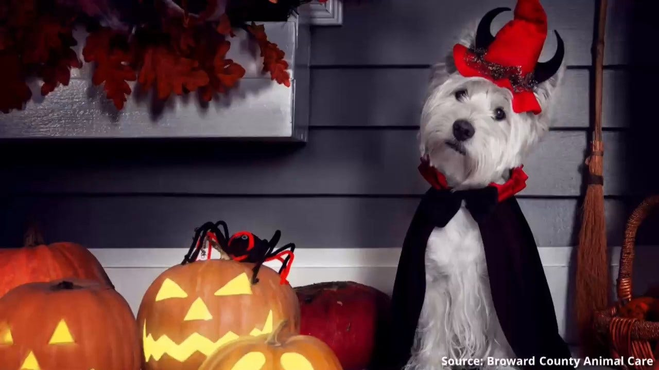 WATCH: Safety Tips For Your Pets On Halloween
