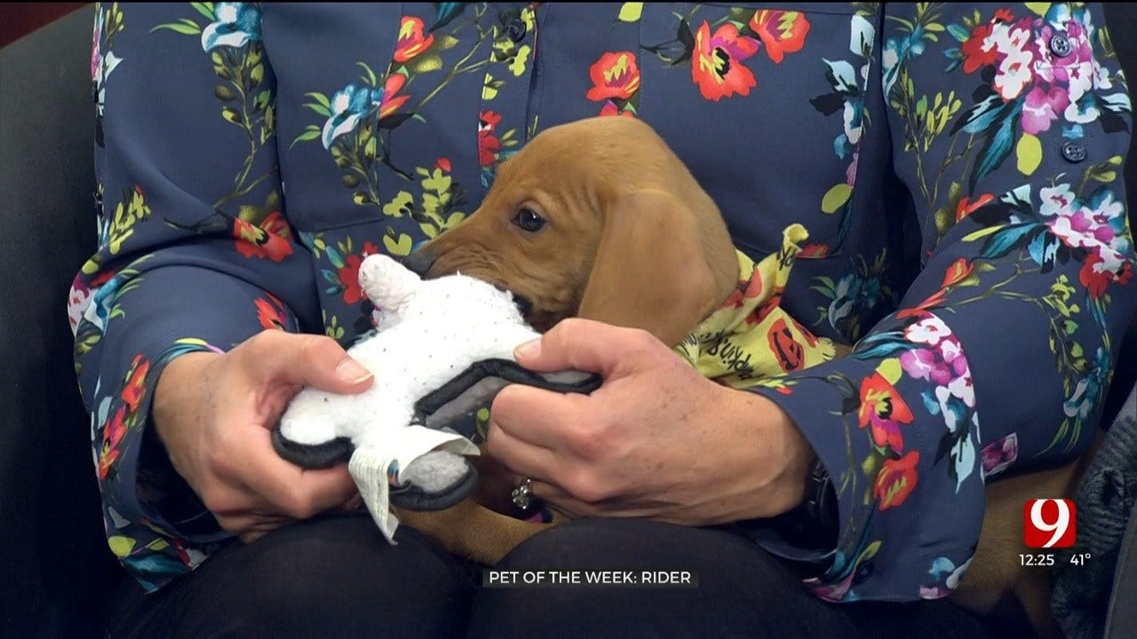 Pet of the Week: Rider