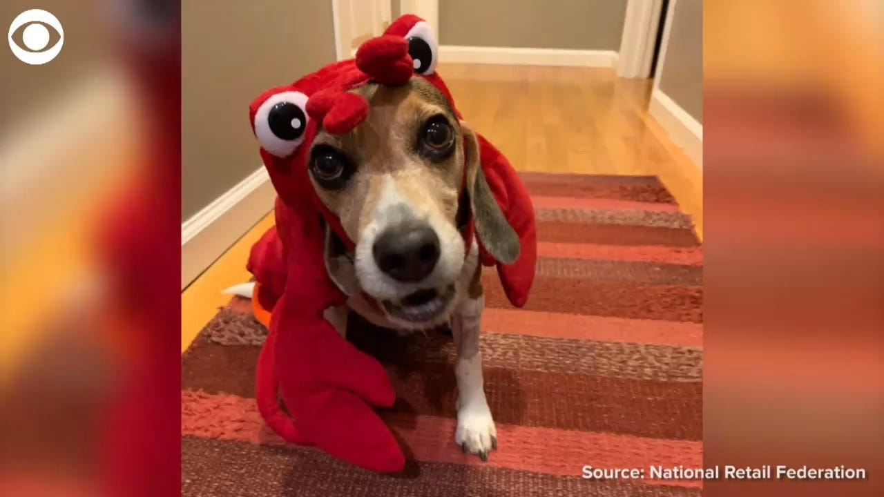 29 Million People Plan On Dressing Their Pet Up For Halloween
