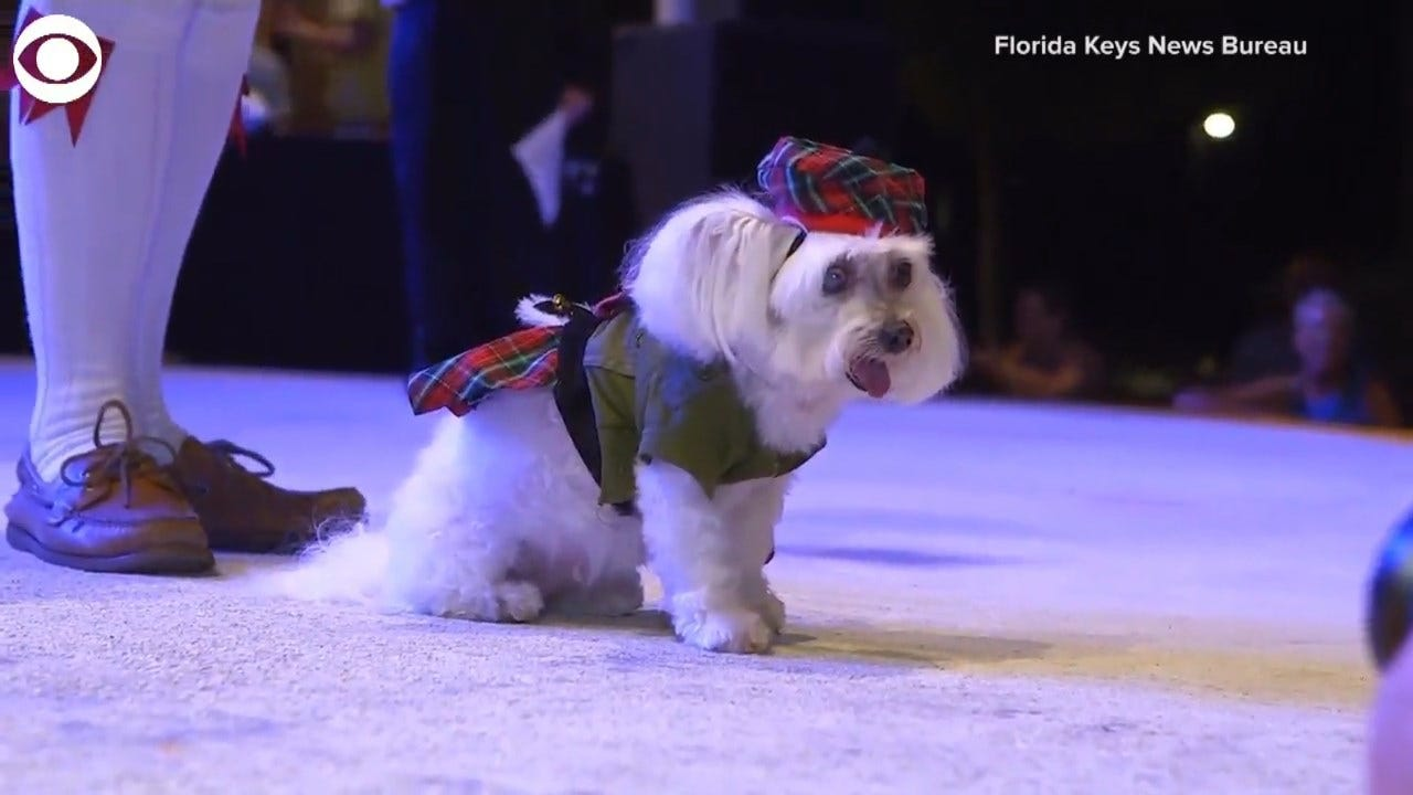 WATCH: Pets Get Into The Halloween Spirit With Costumes