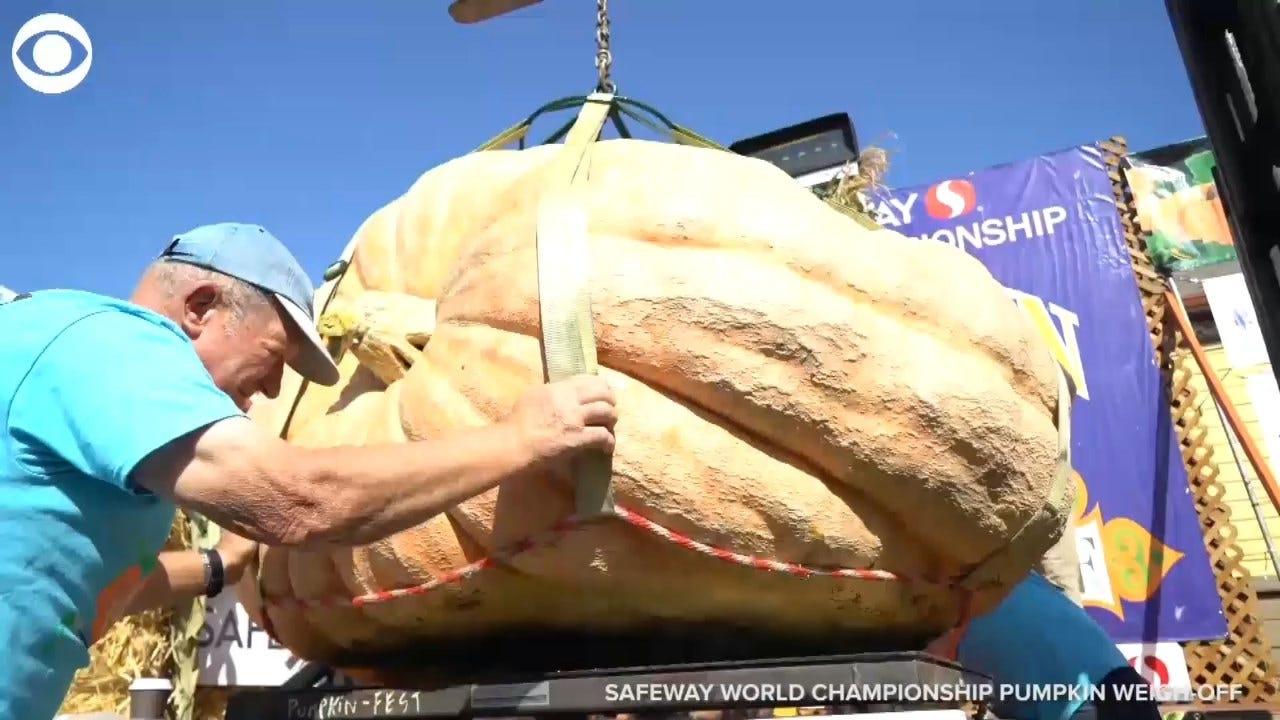 WHOA! This Pumpkin Set A California Record