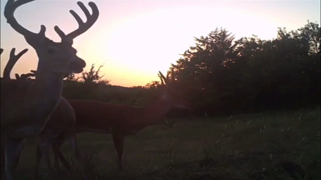 Outdoor Life: Hunting