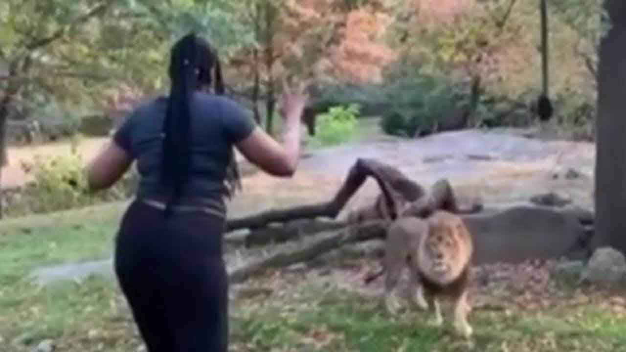 Reactions After Woman Climbs Into Exhibit With Lion At Bronx Zoo