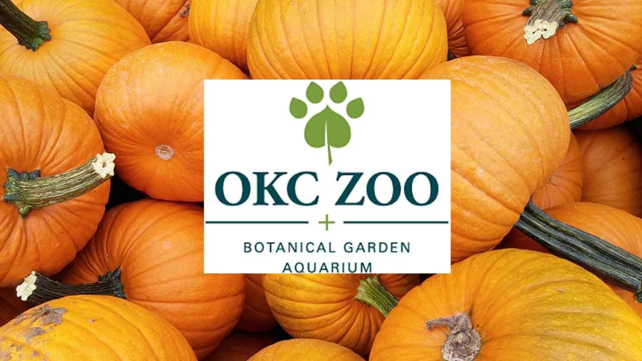 OKC Zoo Offers Free Zoo Admission For Pumpkin Donations