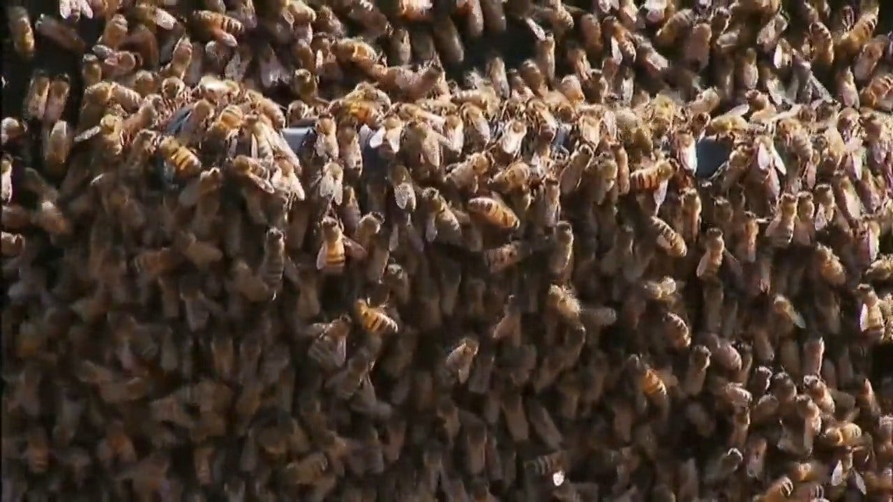 WATCH: Thousands Of Bees Swarm Car