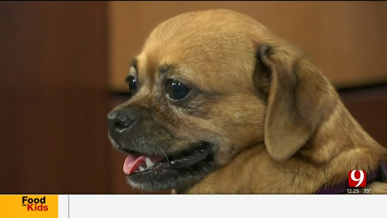 Pet of the Week: Daisy