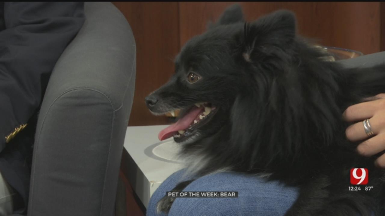 Pet of the Week: Bear