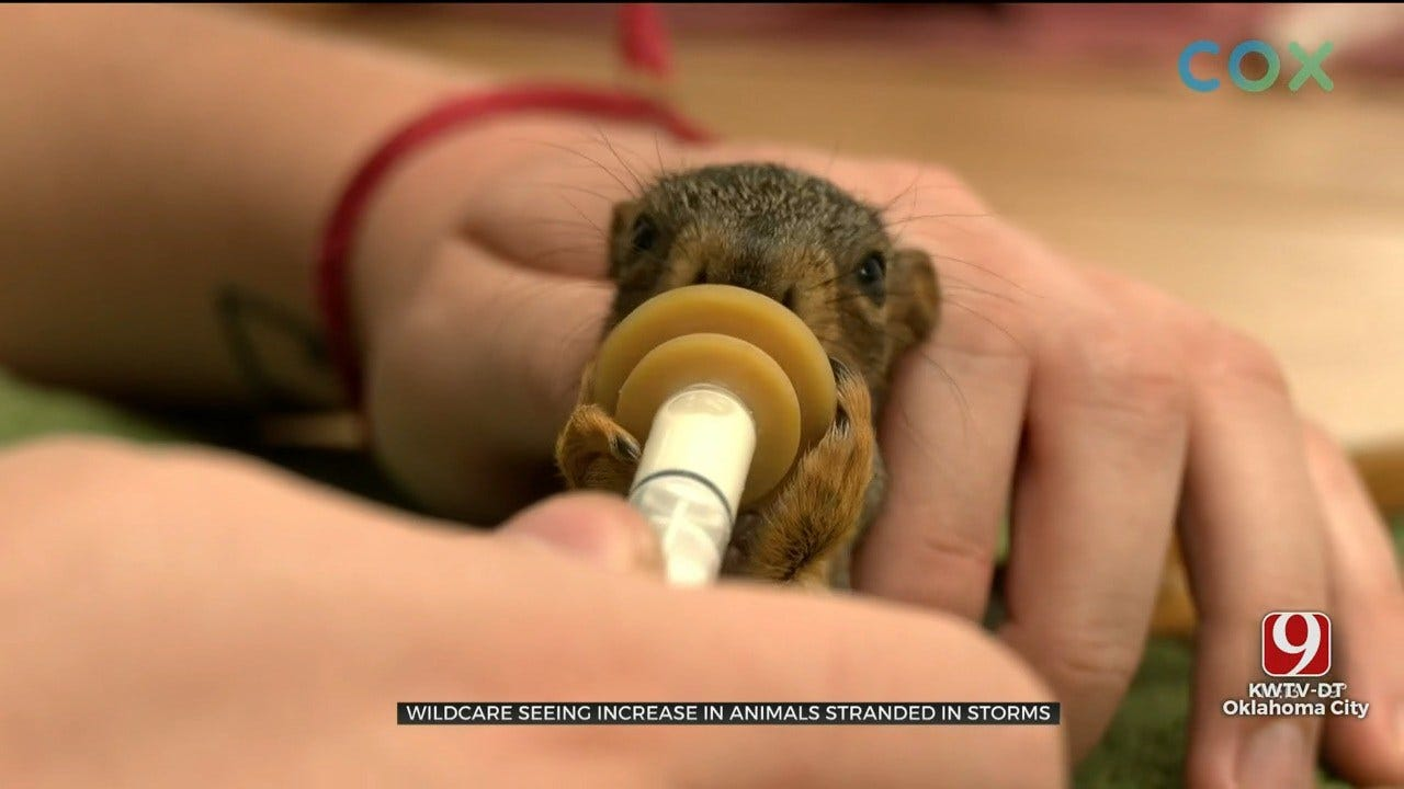 WildCare Foundation Seeing Increase In Animals Stranded In Storms