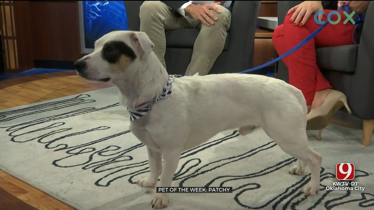 Pet of the Week: Patchy