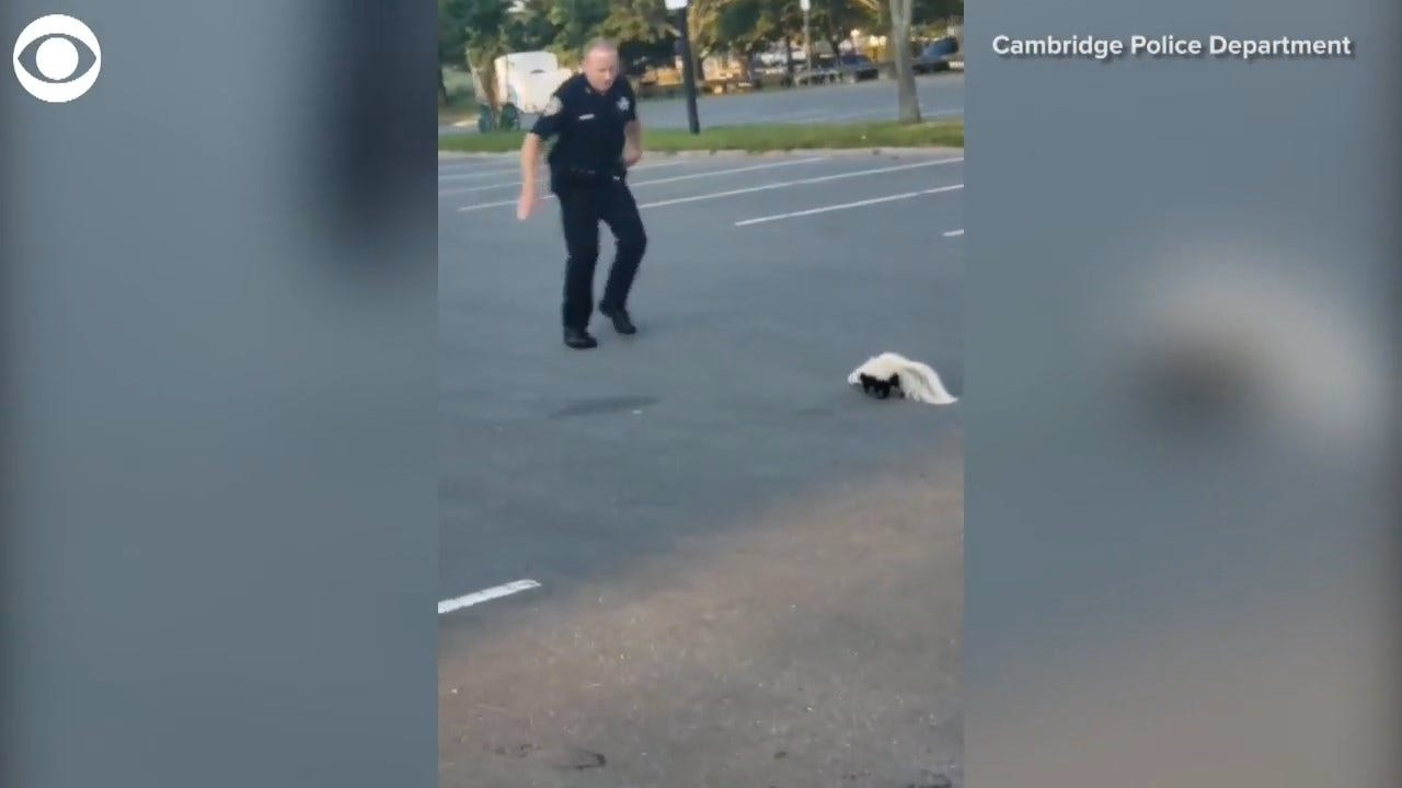 Officers Rescue Skunk From Yogurt Cup Stuck On Head