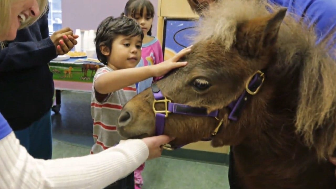 Miniature Horses Cleared For Take Off As Service Animals