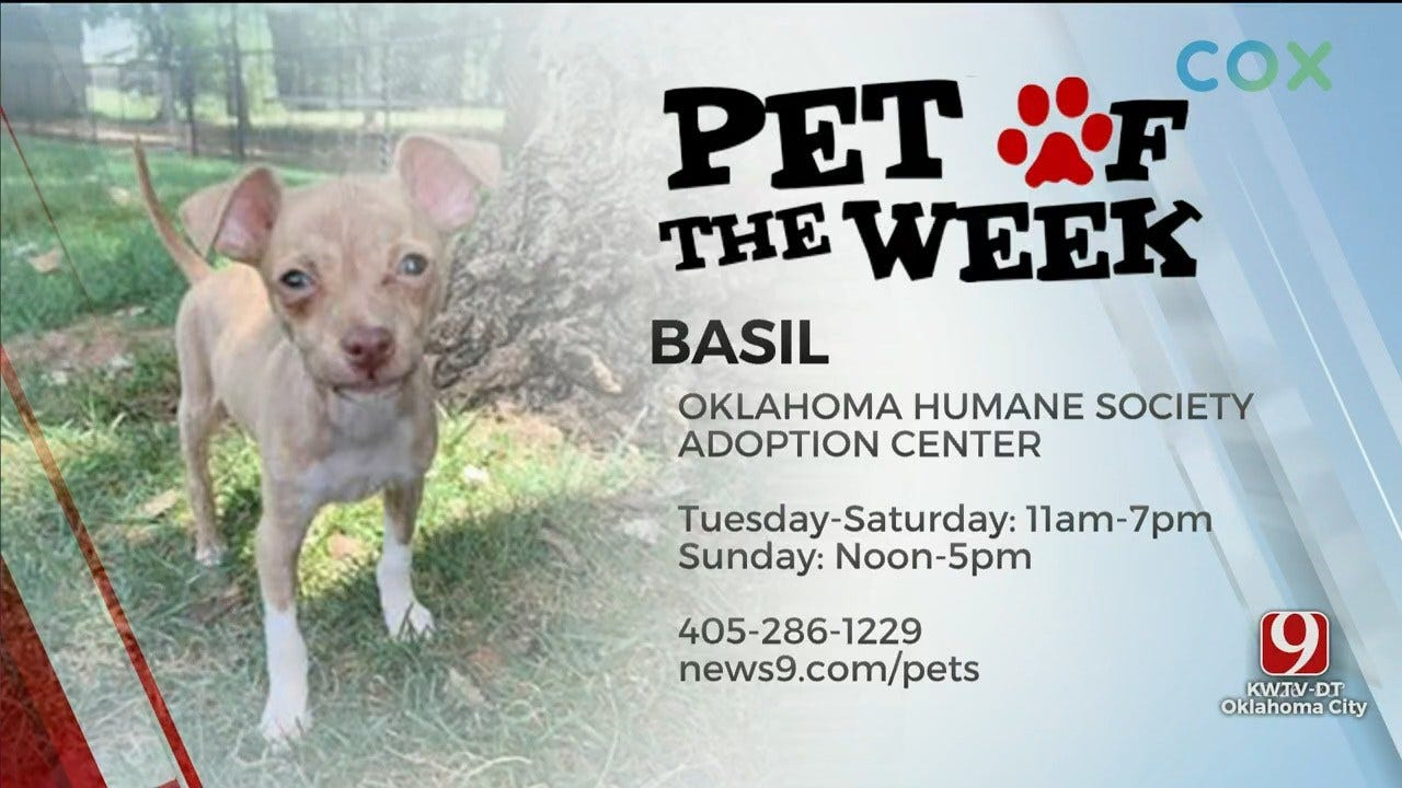Pet of the Week: Basil
