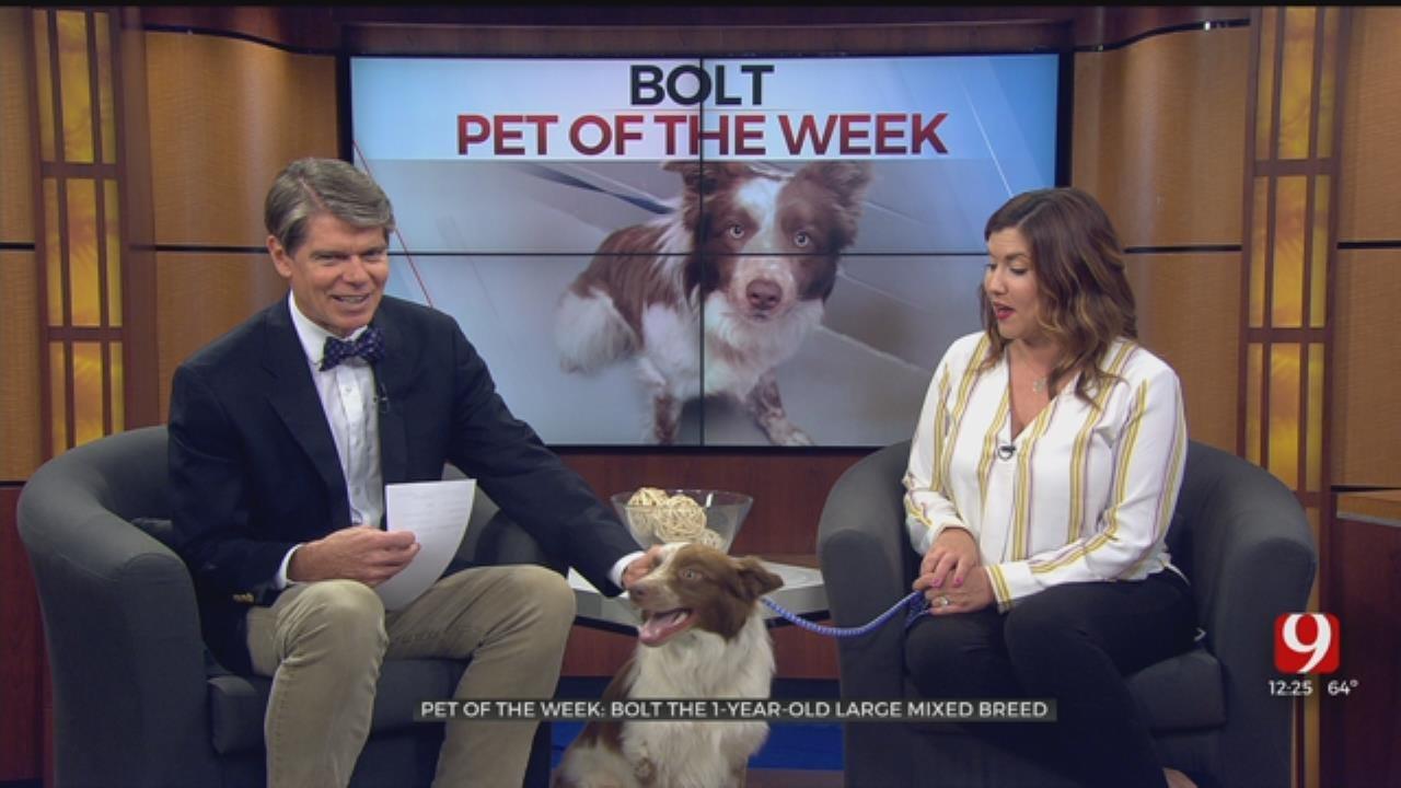 Pet of the Week: Bolt