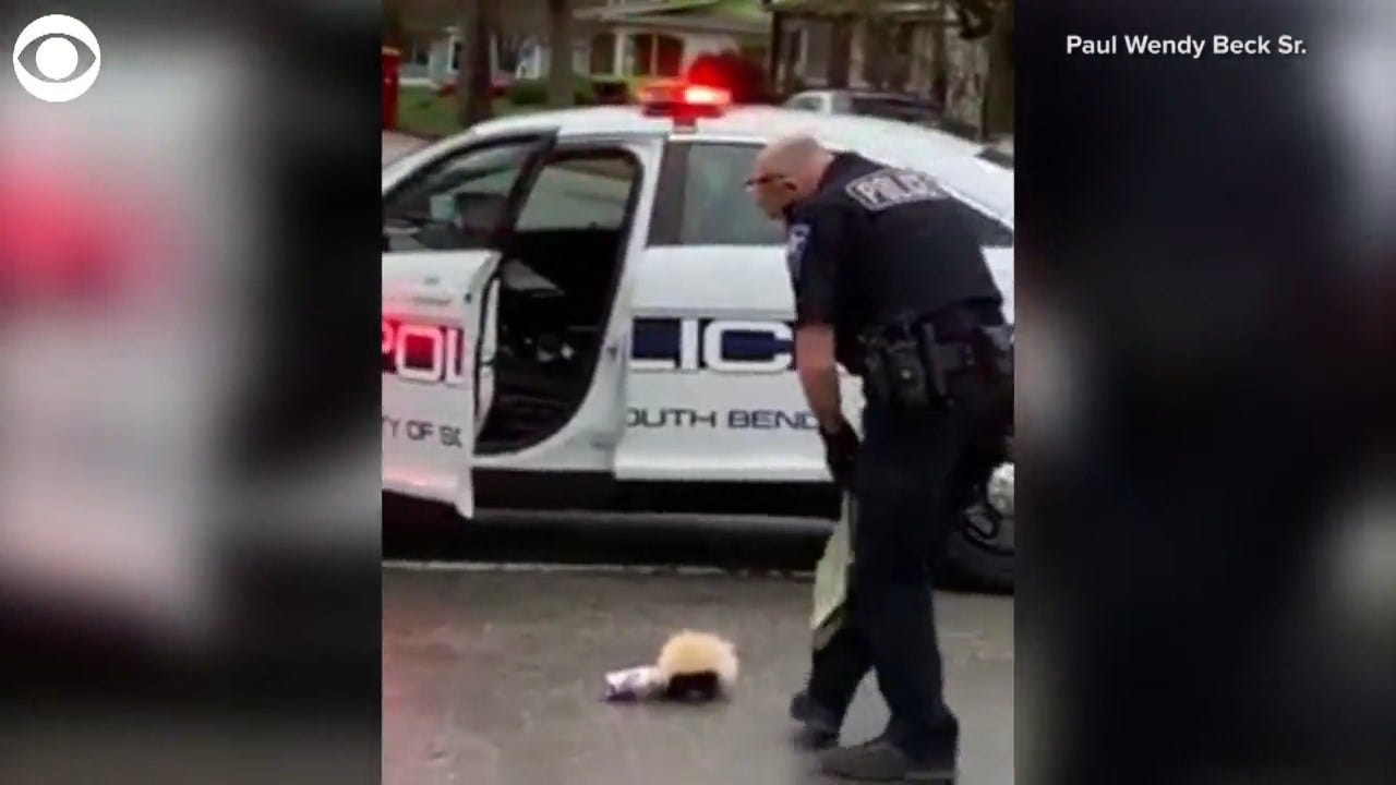 Officer Helps A Skunk