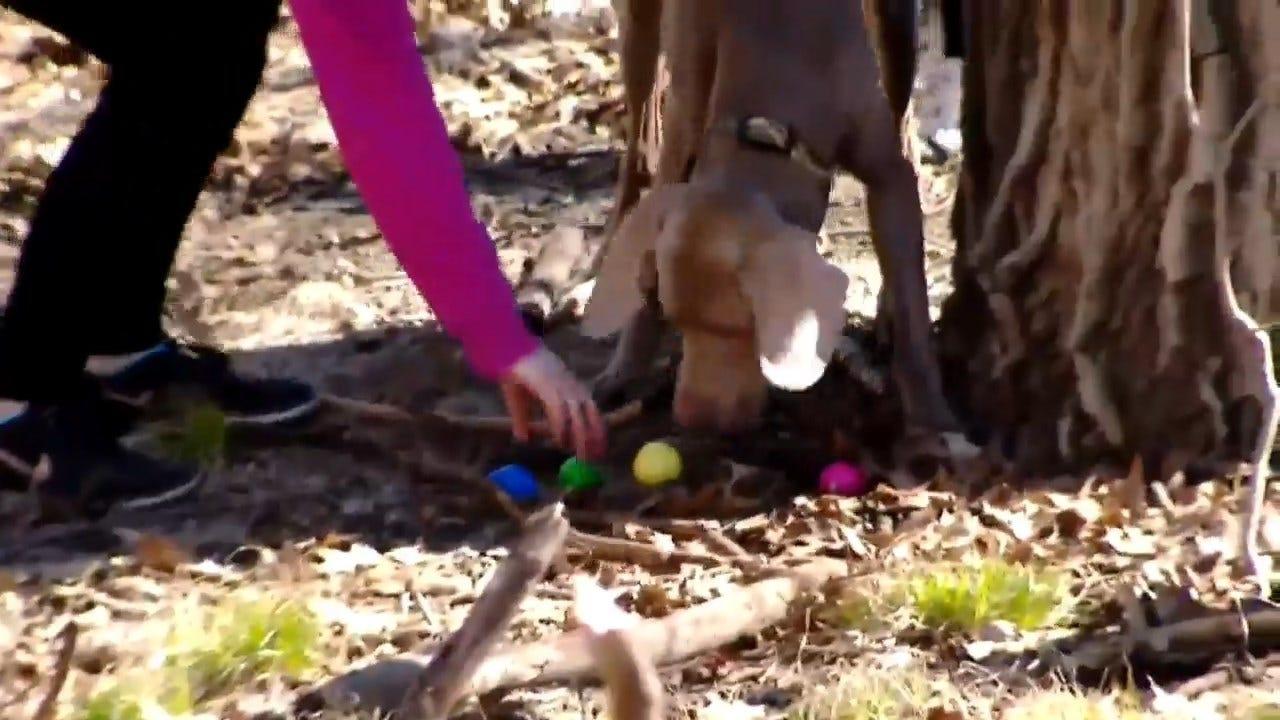 WATCH: Dog Easter Egg Hunt Held In Wisconsin