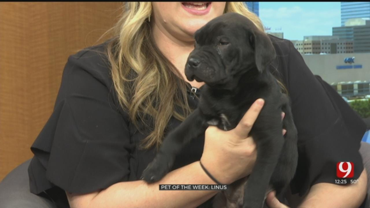 Pet Of The Week: Linus