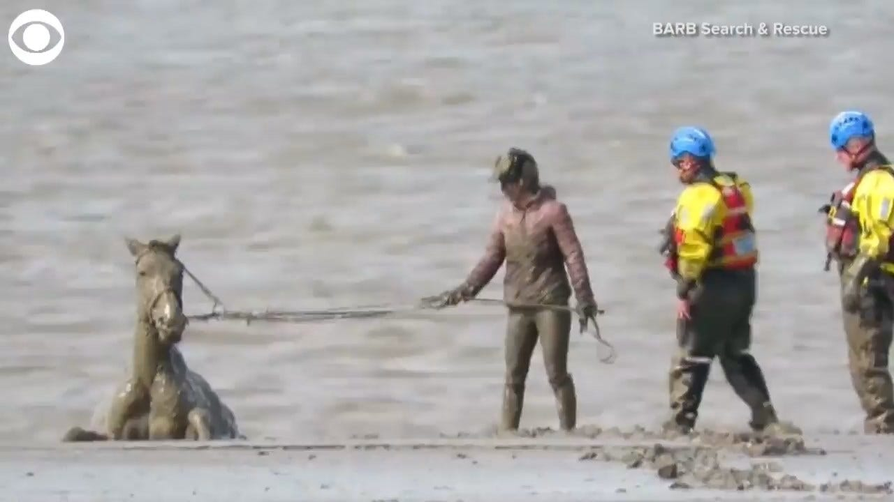 Horse Stuck In The Mud Is Rescued At England Beach