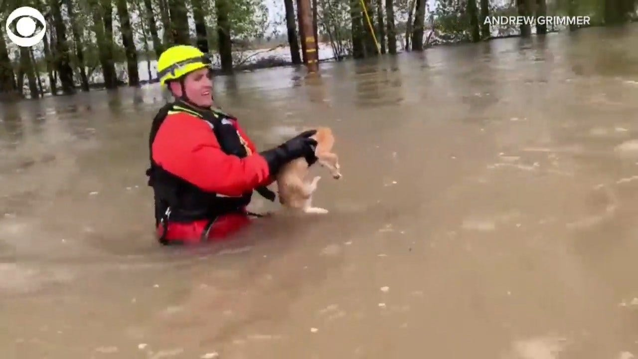 WATCH: Man Saves Cat From Oregon Floodwaters