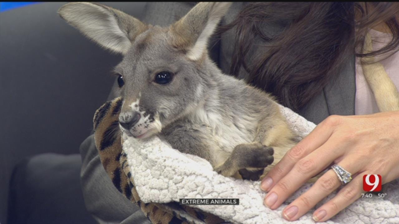 Extreme Animals Makes A Visit To News 9