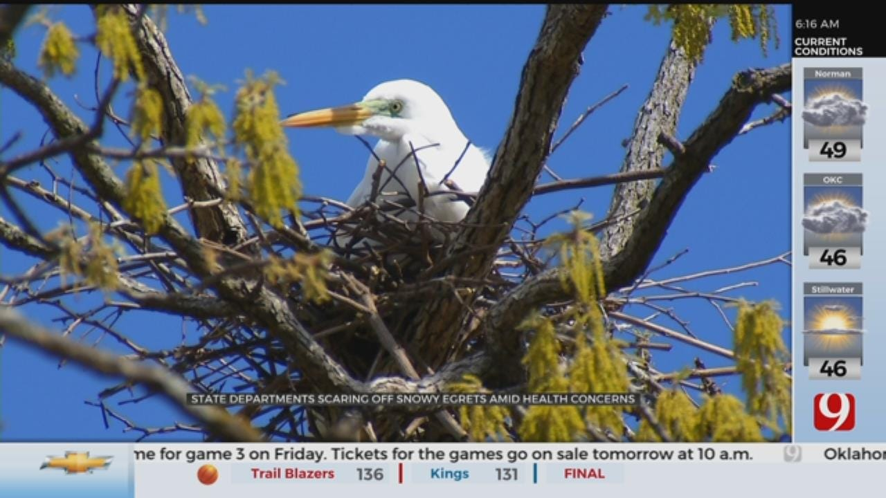 State Department Scaring Off Snowy Egrets At Thousand Oaks Amid Health Concerns