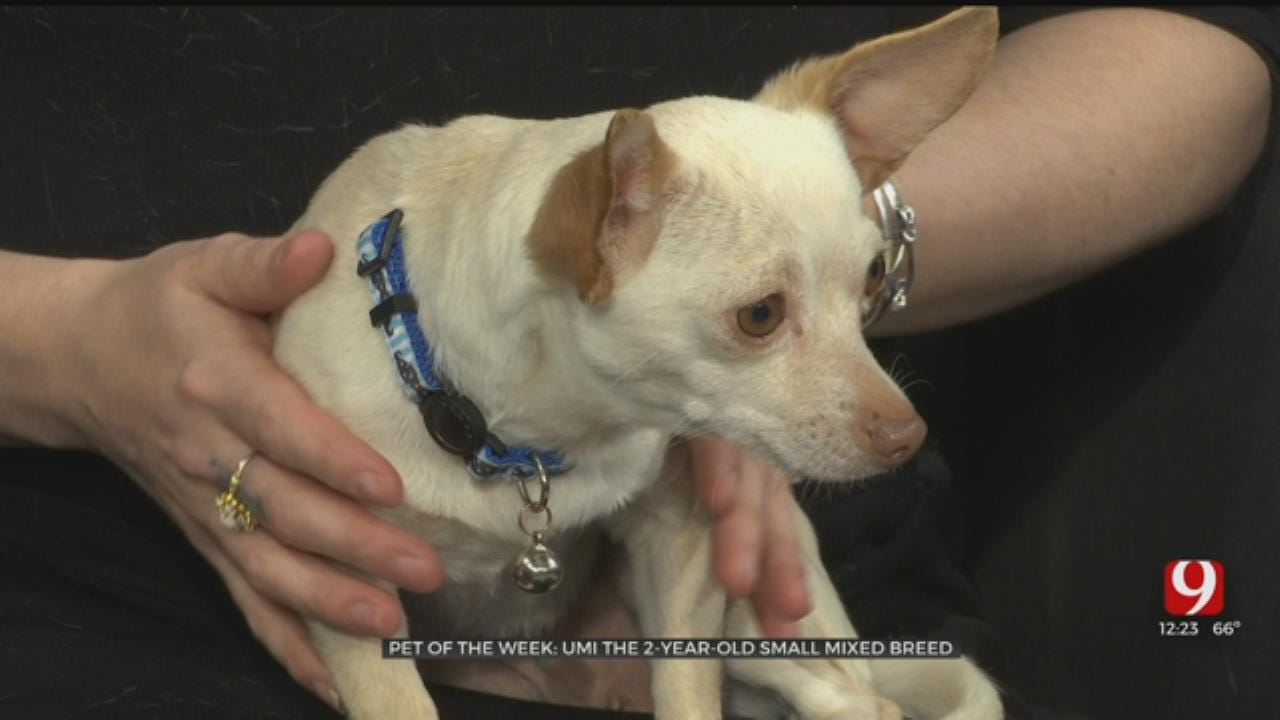 Pet of the Week: Umi