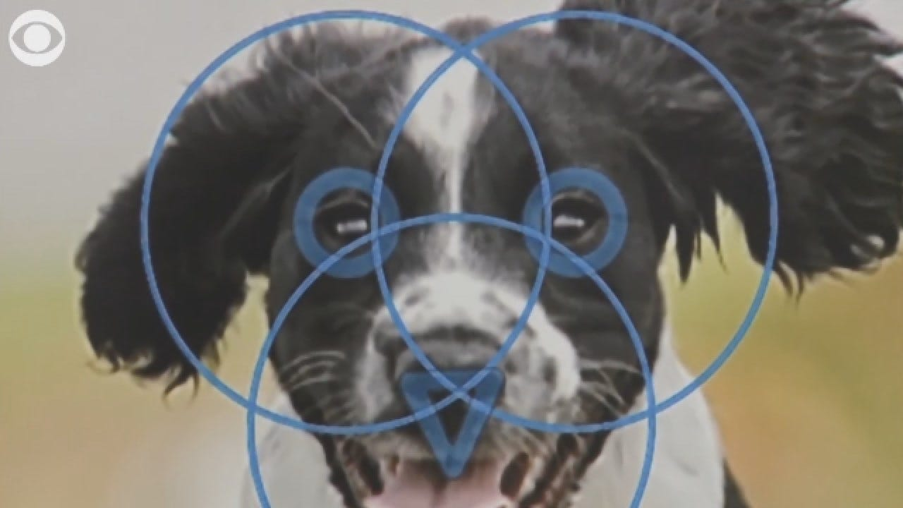Facial Recognition Technology For Your Pet?