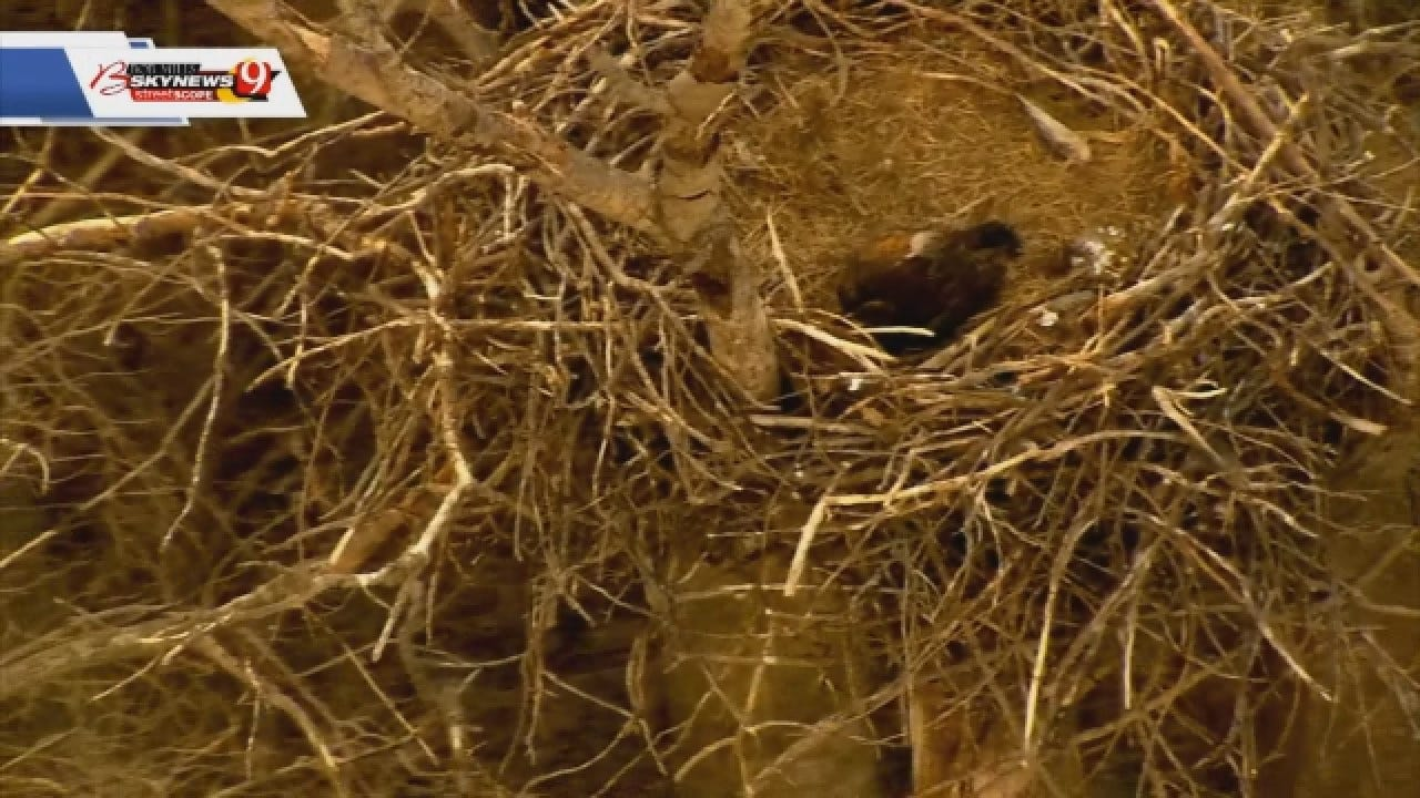 WATCH: Bob Mills SkyNews9 Sees Massive Bald Eagle's Nest Near Luther