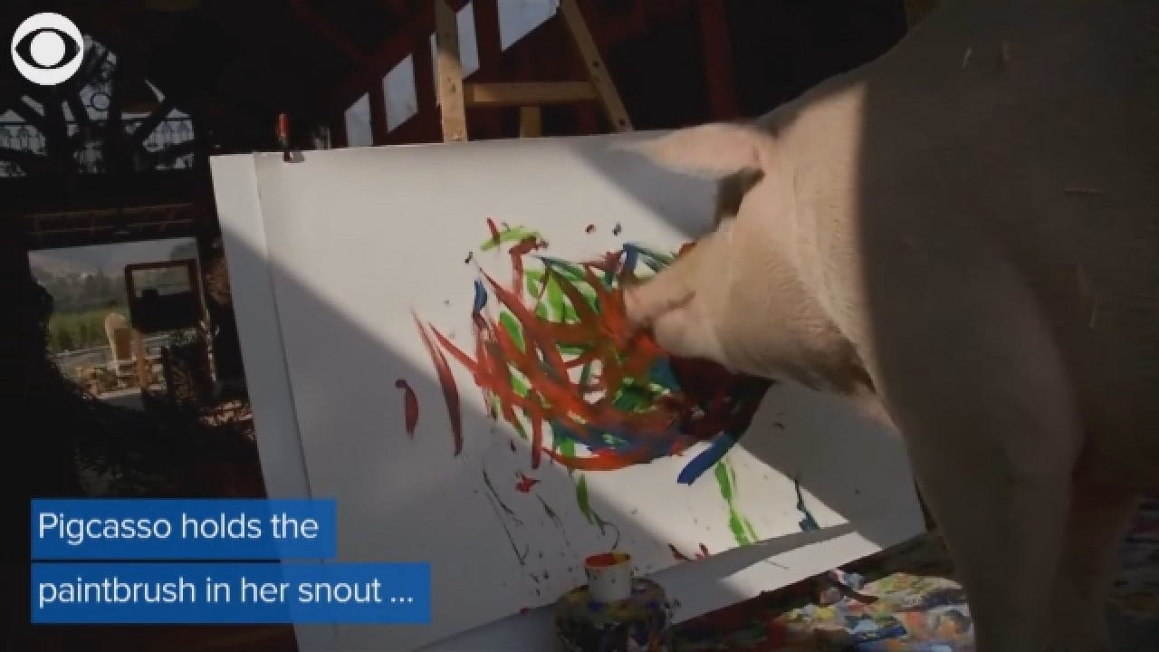 WATCH: Meet Pigcasso, The Painting Pig
