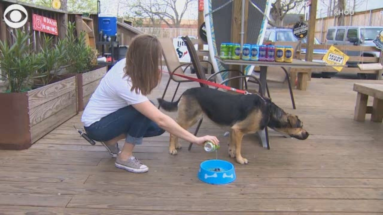 Houston Brewery Makes Beer For Dogs