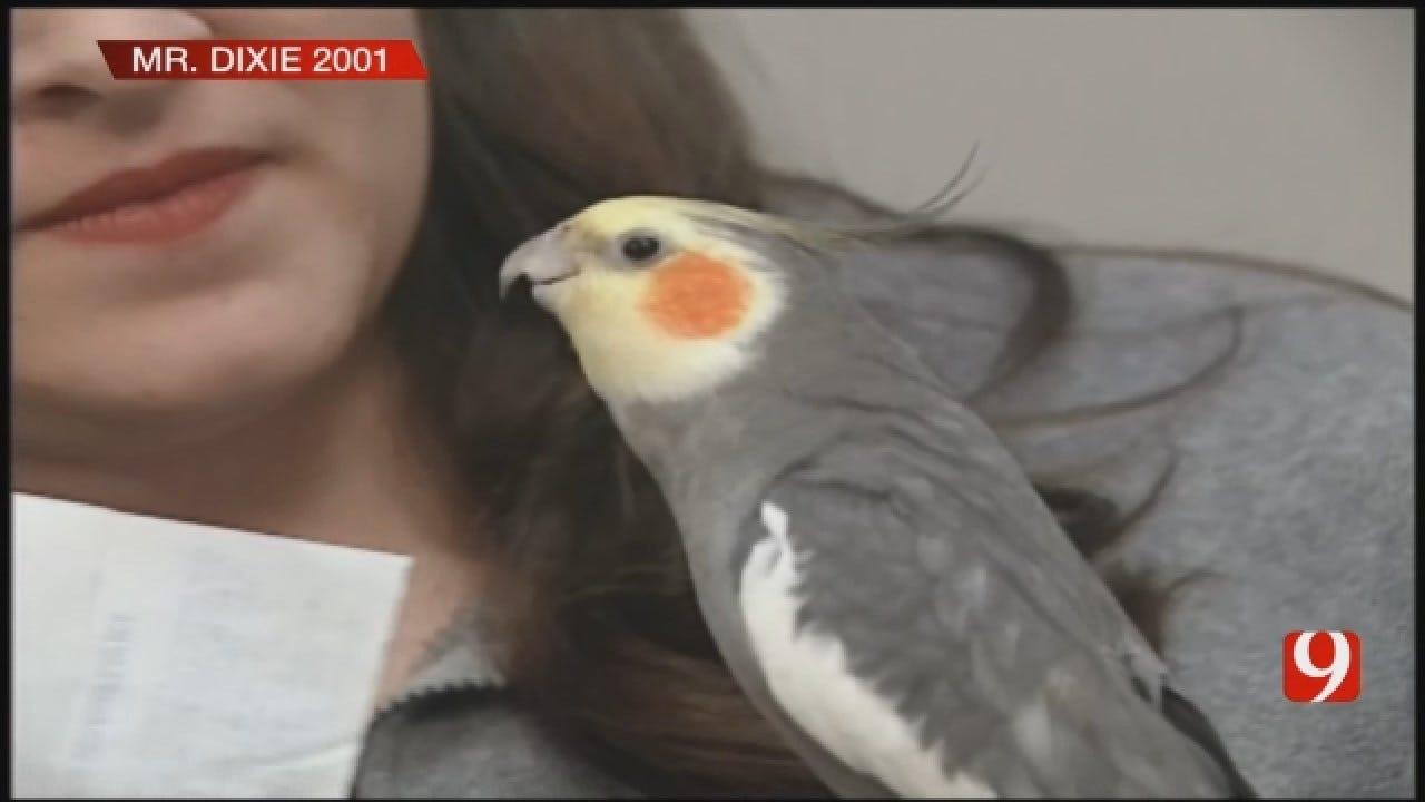 FLASHBACK: Woman Teaches Cockatiel 'Boomer Sooner' Anthem