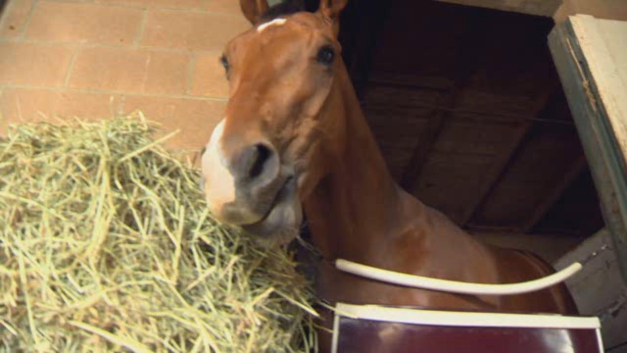 Santa Anita Cancels Racing Indefinitely After 21 Horse Deaths In 10 Weeks.wmv