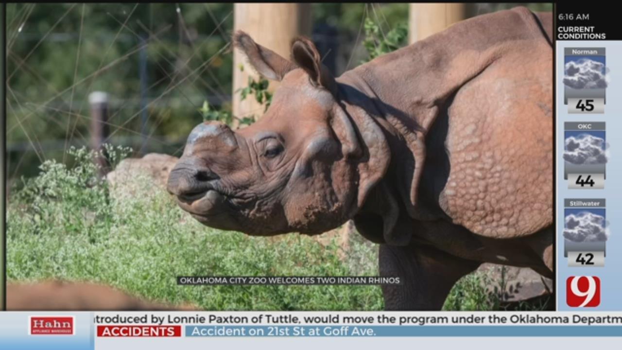 Oklahoma City Zoo Welcomes 2 Indian Rhinos