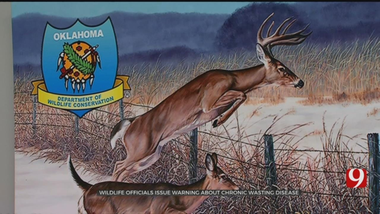 Officials Working To Keep Deer Disease Out Of Oklahoma