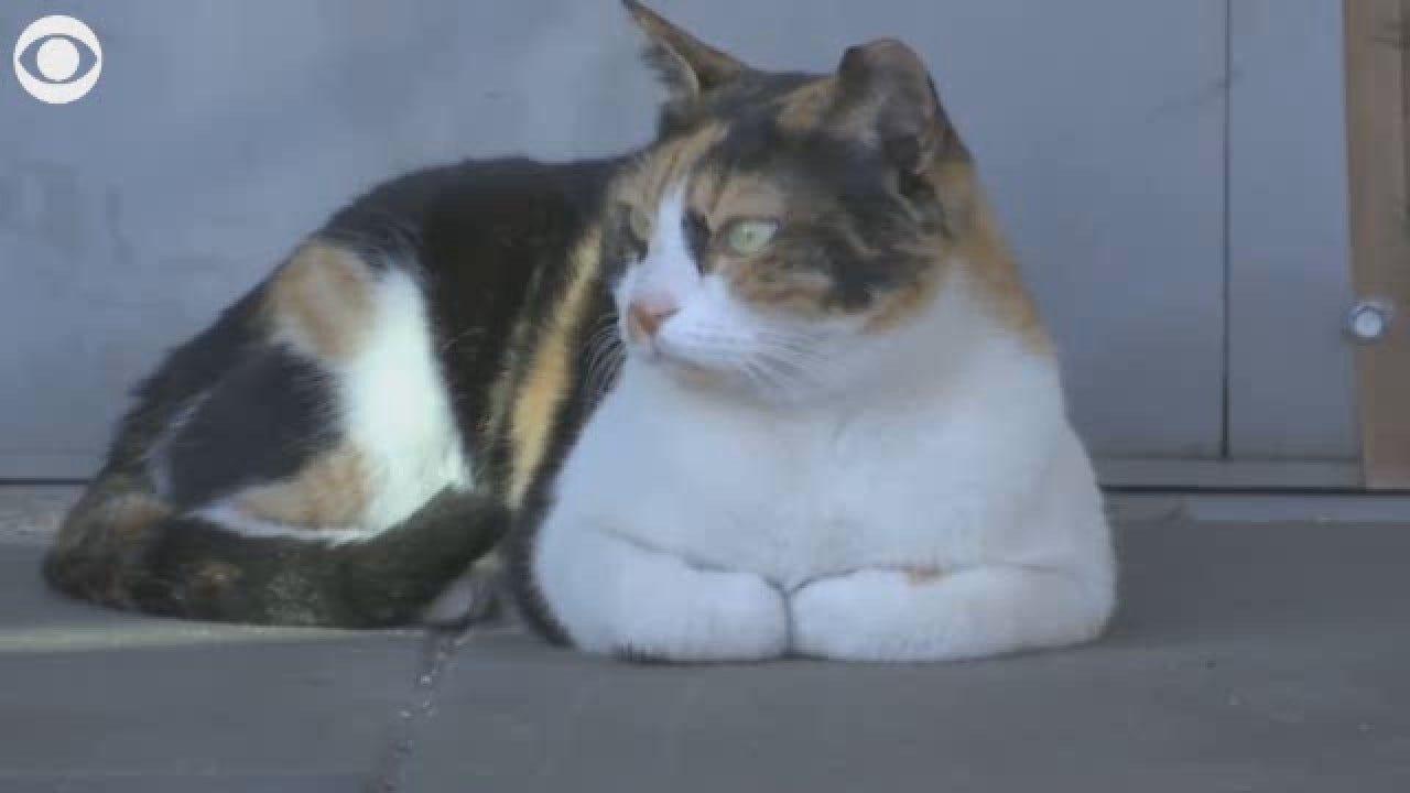 Meet Mitsi, The Cool Israeli Train Cat