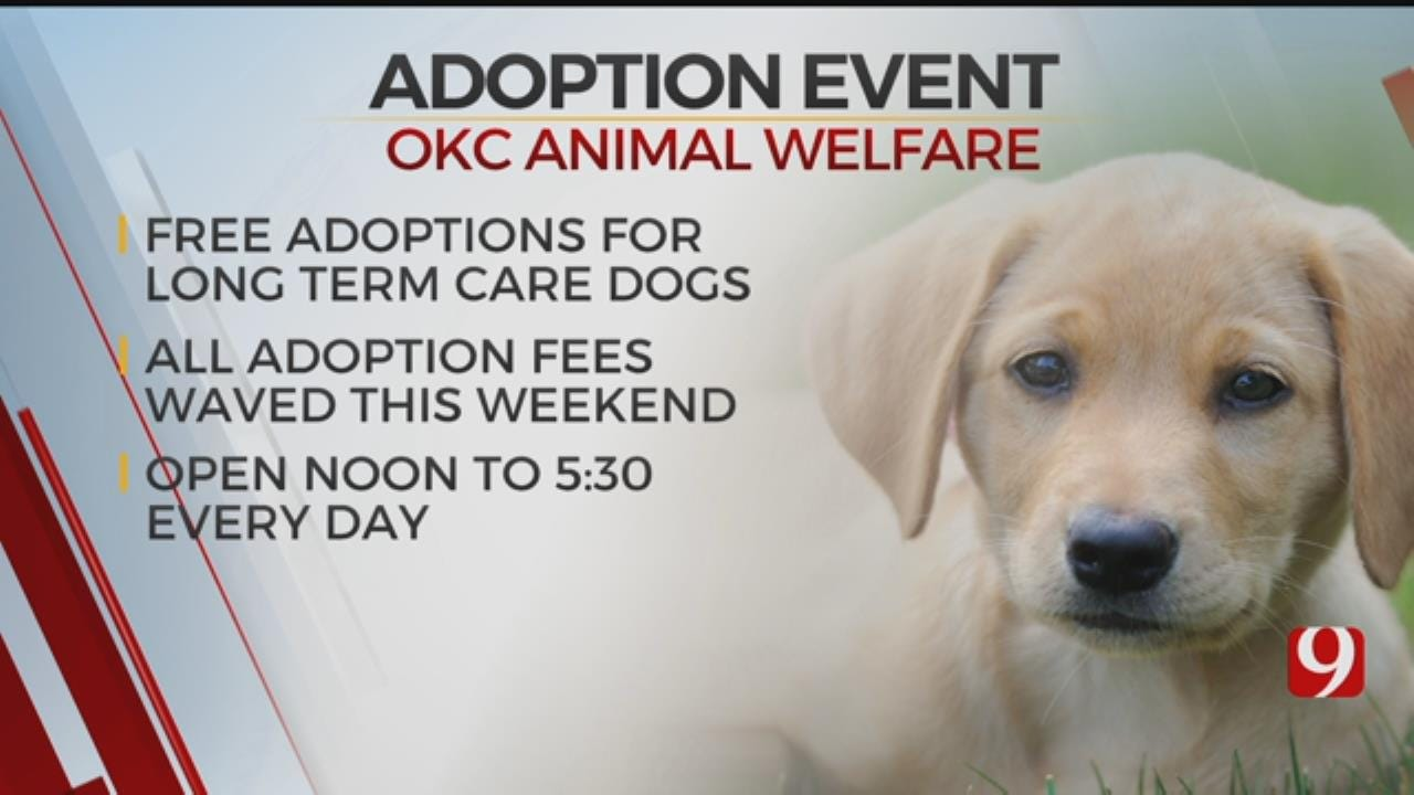 Adoption Fees Waived For Dogs At Oklahoma City Animal Welfare Event