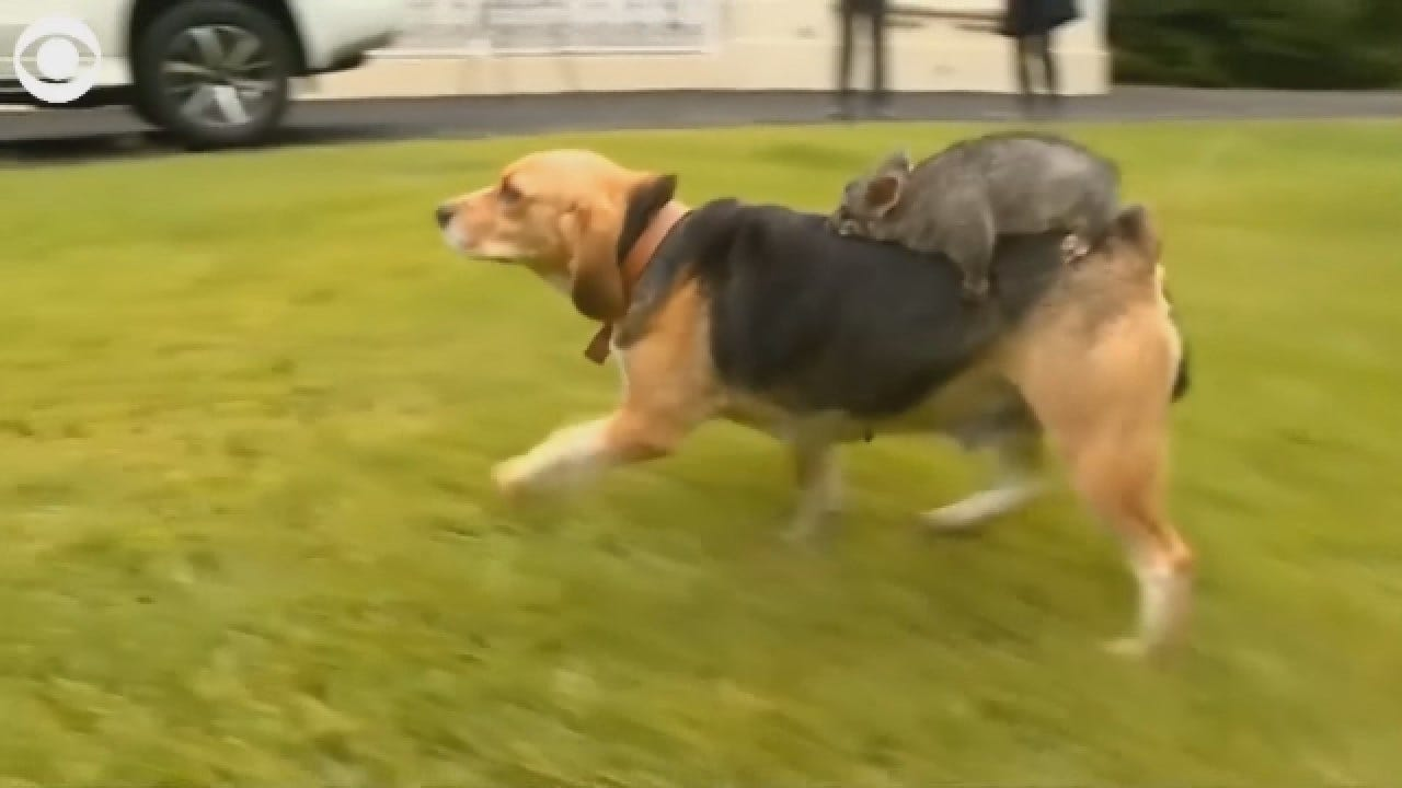 Web Extra: Meet The Dog & Possum Who Have Turned Into Besties