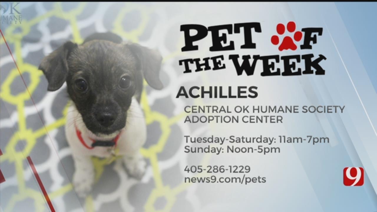 Pet Of The Week: Achilles