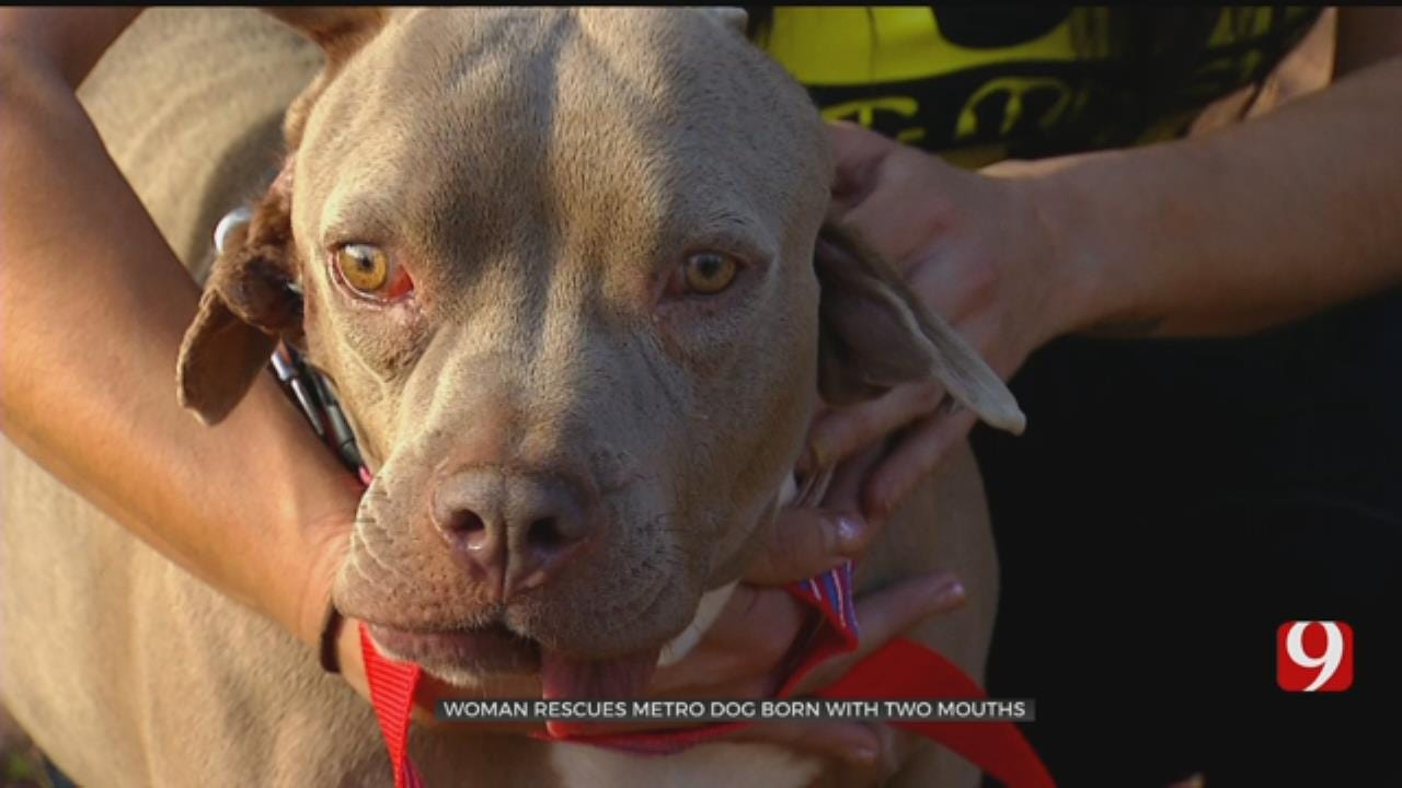 Woman Rescues Oklahoma Dog Born With Two Mouths