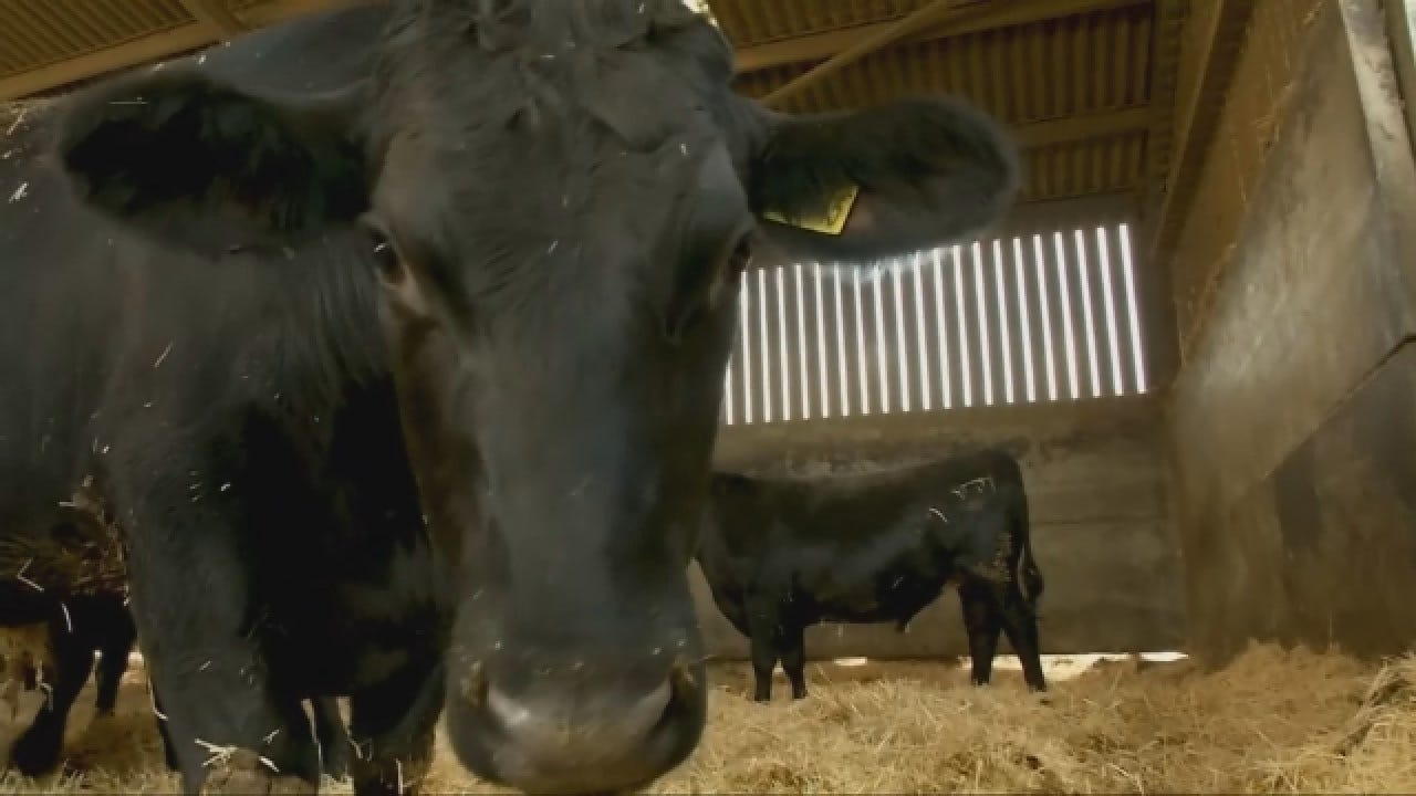Tinder For Cows Takes 'Meat Market' To The Next Level