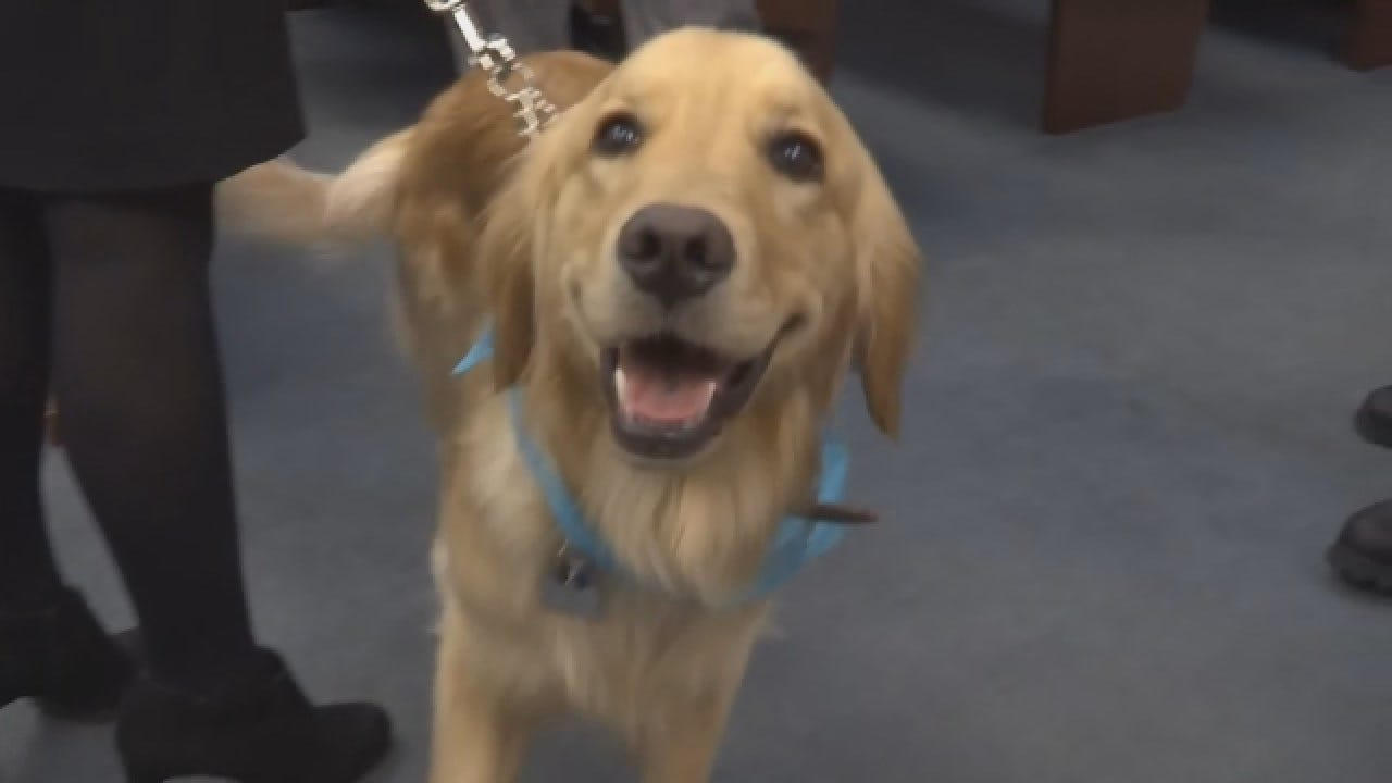 Prosecutor's Office Adds Trained Support Dog