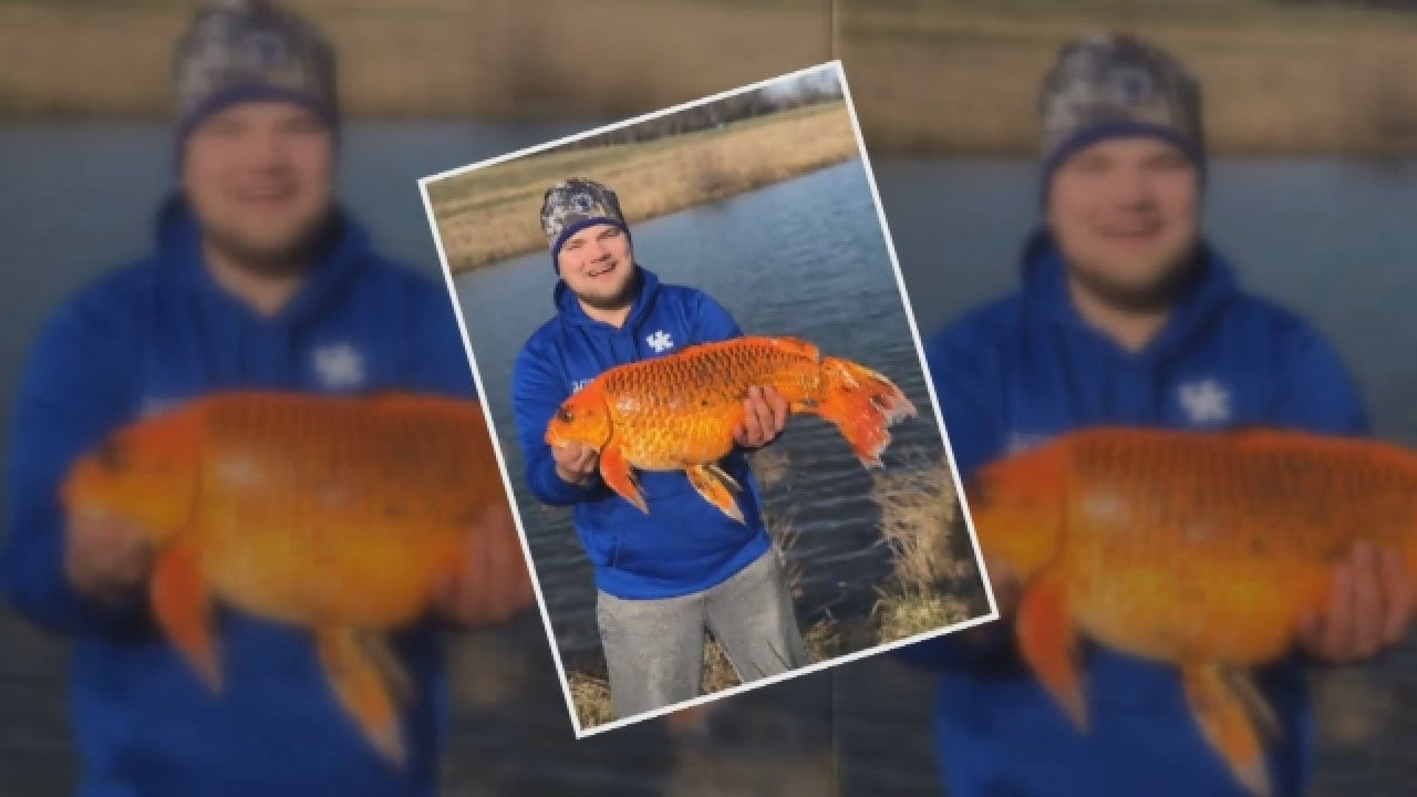 Massive 20-Pound 'Goldfish' Reeled In Using Just A Biscuit