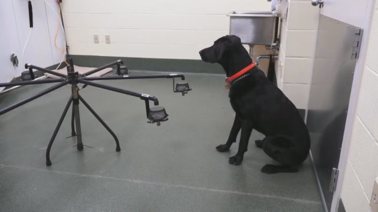 Canines Sniff Out Cancer For First Responders?