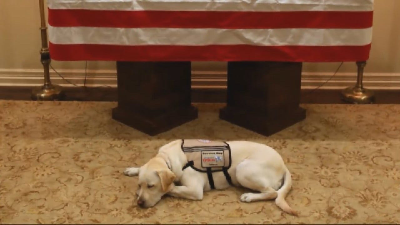 President George HW Bush's Service Dog To Work With Veterans On Next Mission